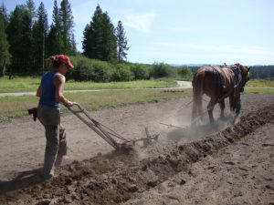 Wendy, a student, plowing with Ann