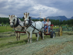 Photo of man teaching a student to drive a pair of horses hooked to a hay rake
