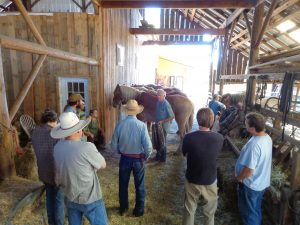 Doc and Steven demonstrating to students harness fitting