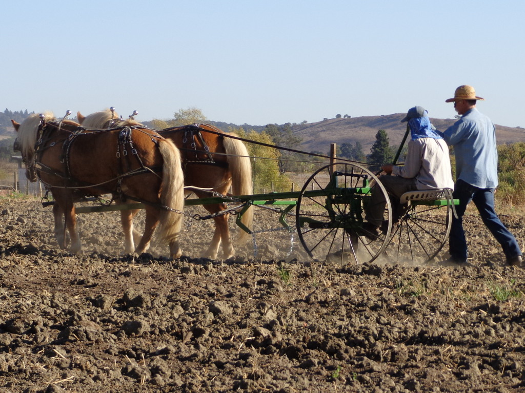 Doc Hammill coaching Bayln who is driving  a Halflinger team on a Pioneer Homesteader,