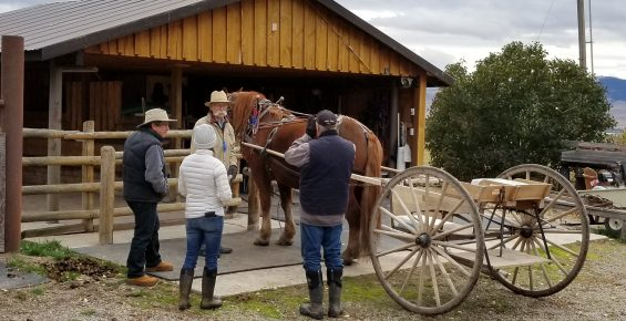 Students practicing hitching a single horse to a Meadowbrook cart