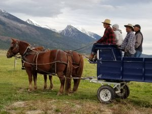 Man and Woman driving a team of red horses from a wagon seat