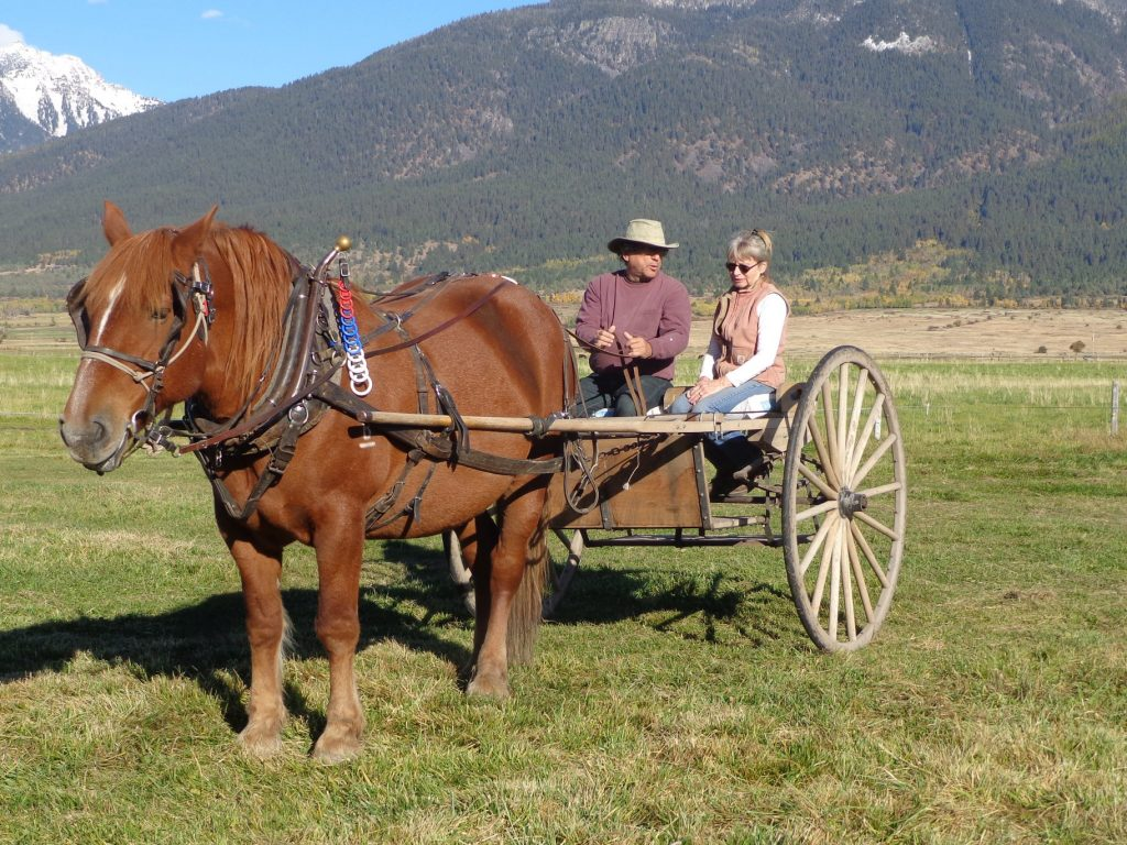 Woman coaching student driving a single red horse hitched to a horse-drawn cart
