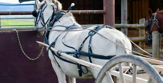 Single horse standing at hitch rail with cart attached