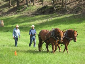 A man coaching a 2nd man learning to ground drive a team of horses