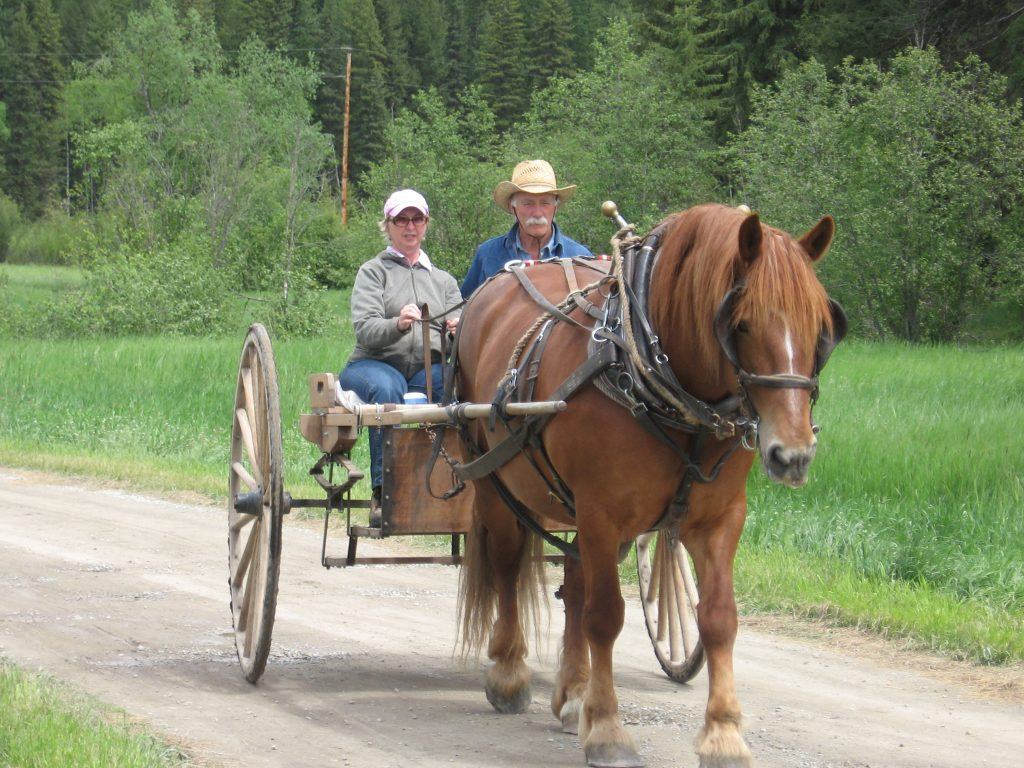 Man and woman driving a single horse hitched to a Meadowbrooke cart