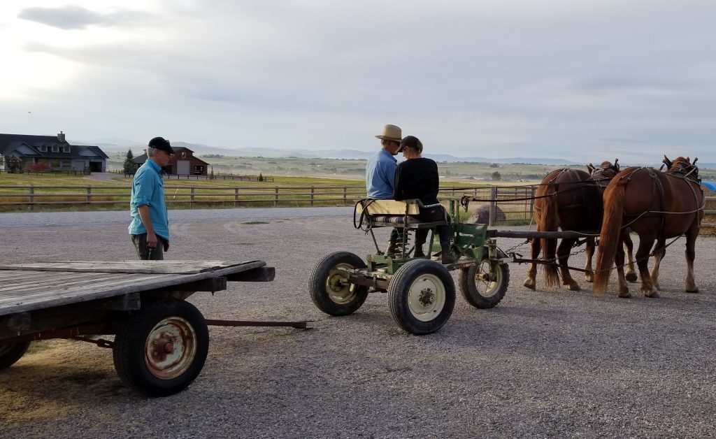 Man back a team of horses in preparation to hitching to a wagon